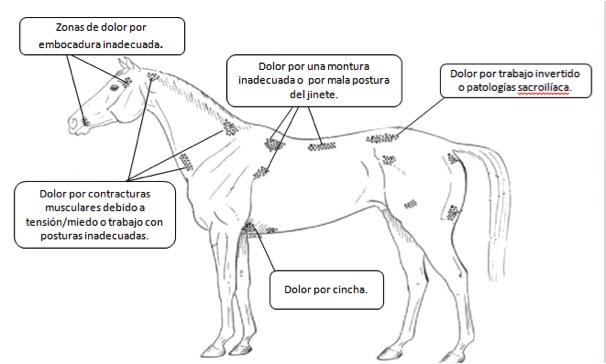 Primera causa de problemas de conducta en equinos: el dolor