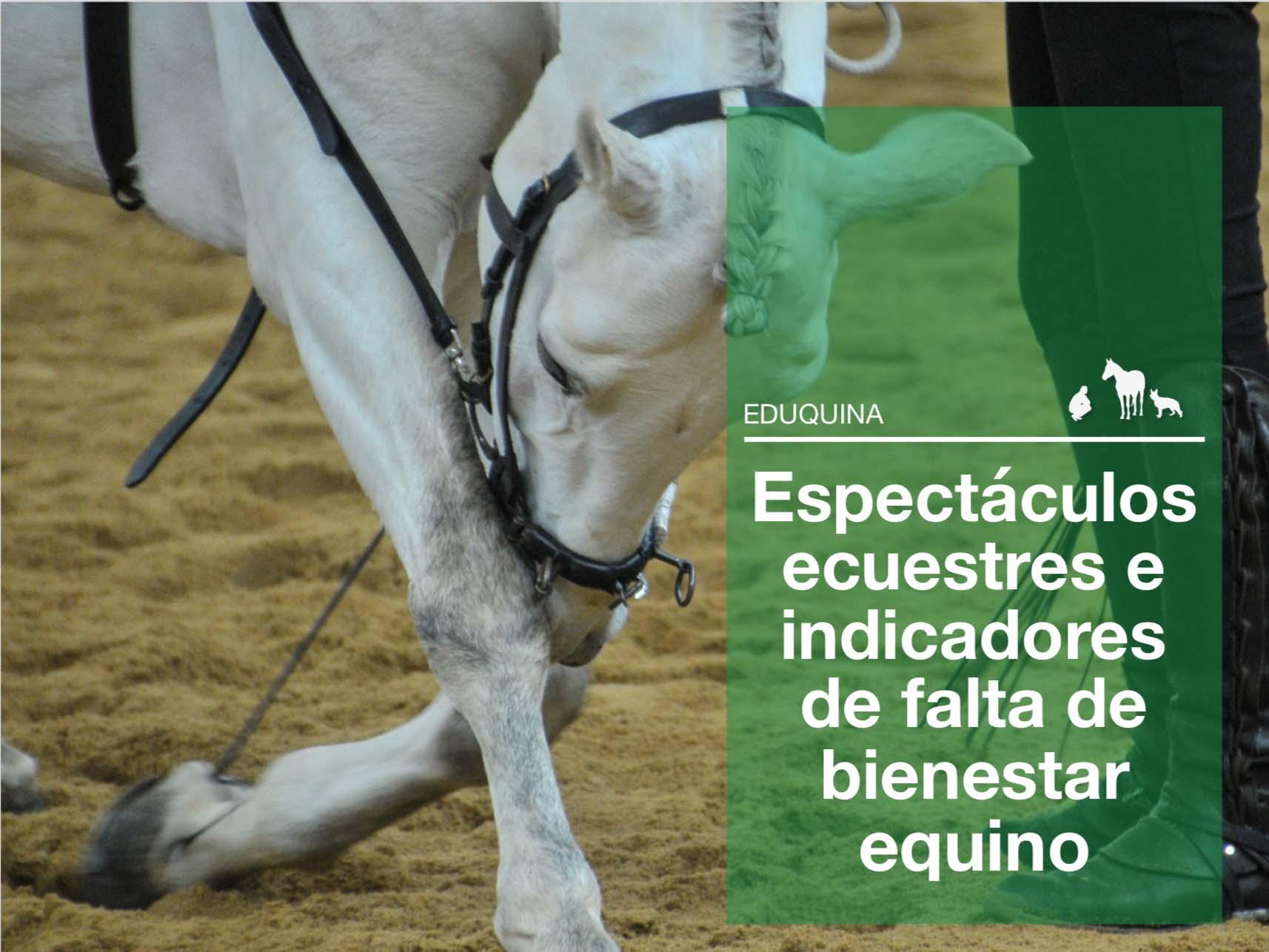 Espectáculos ecuestres e indicadores de falta de bienestar equino.