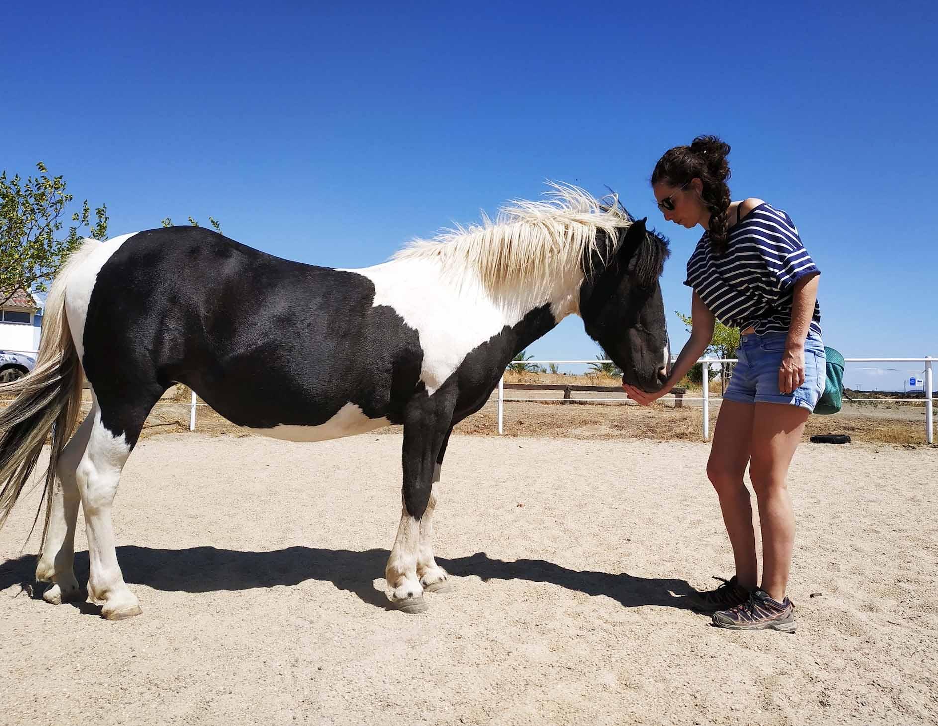 Refuerzos positivos en la equitación