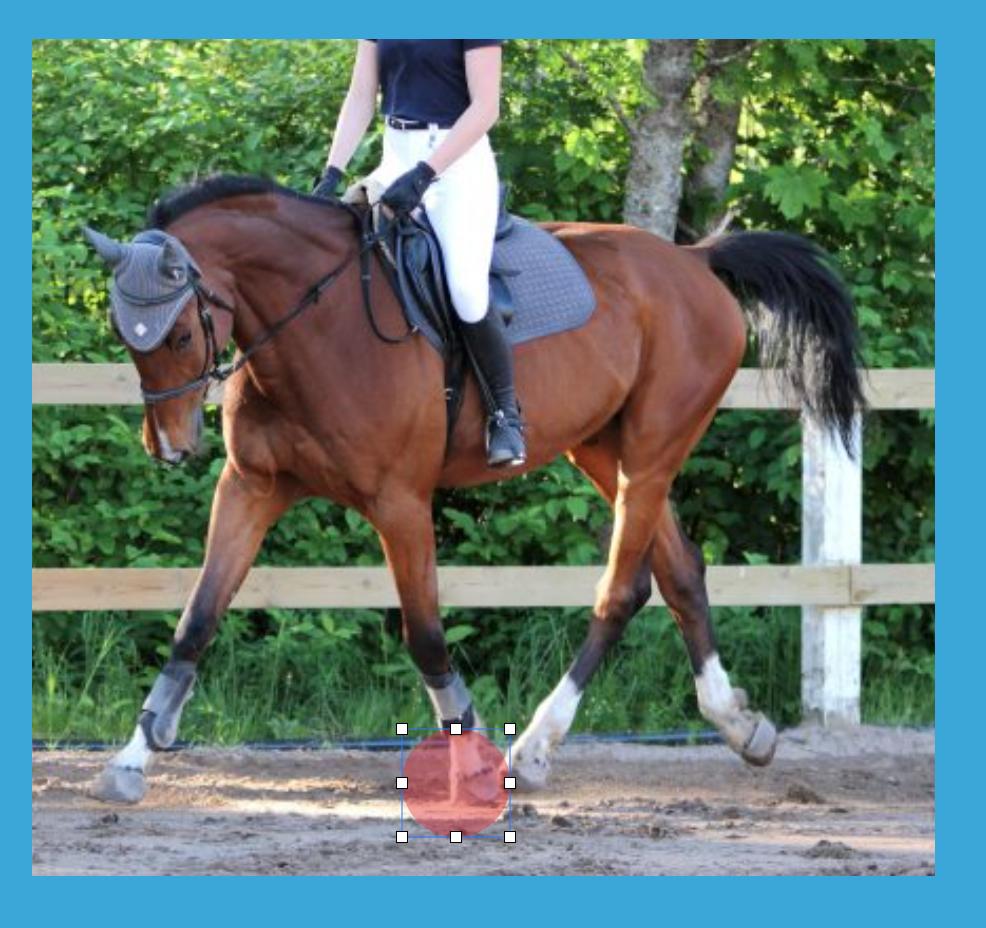 ¿Sabes ver si tu caballo esta equilibrado?