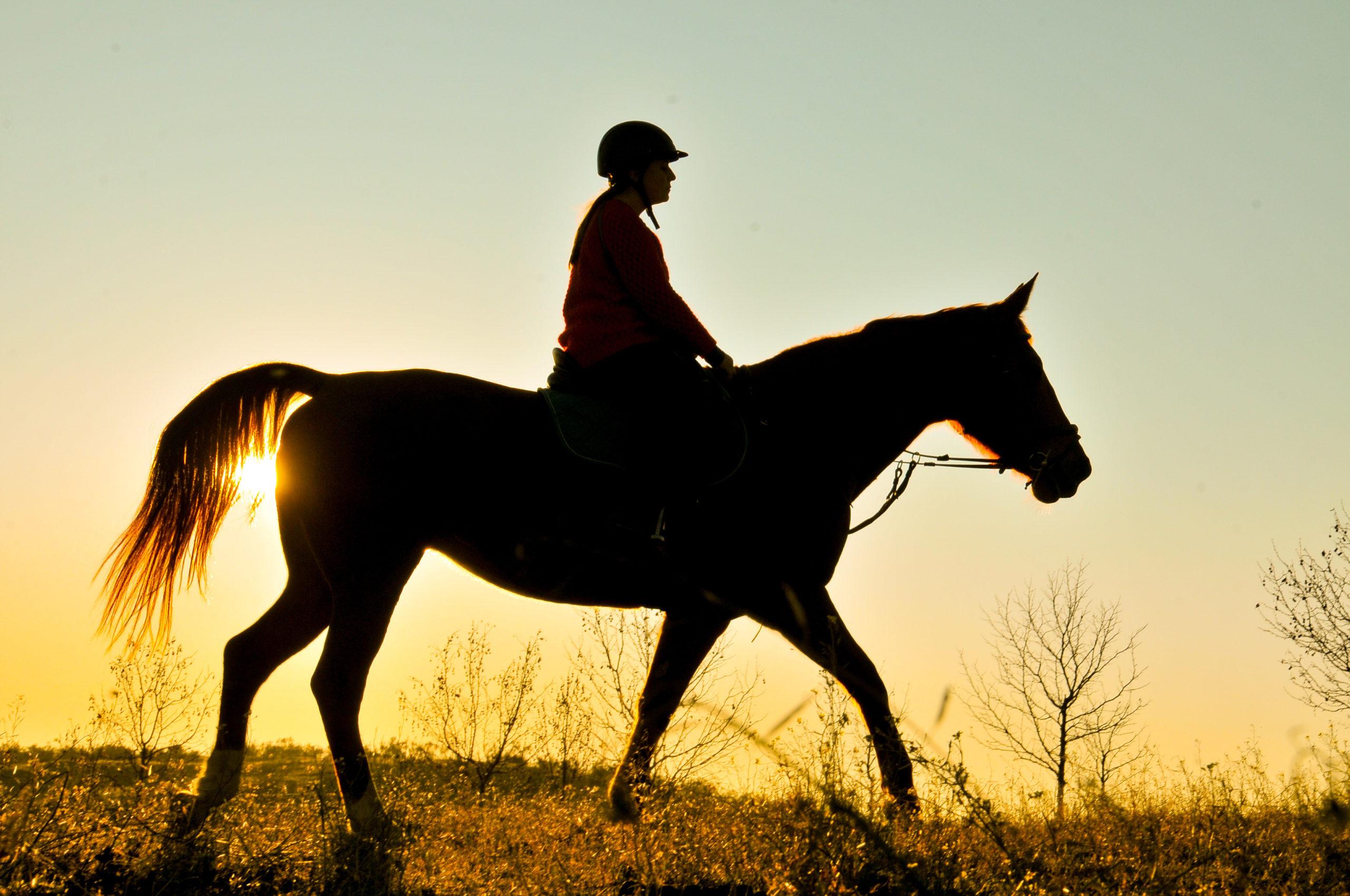 ¿Cómo puede ayudar la etología a mejorar la equitación?
