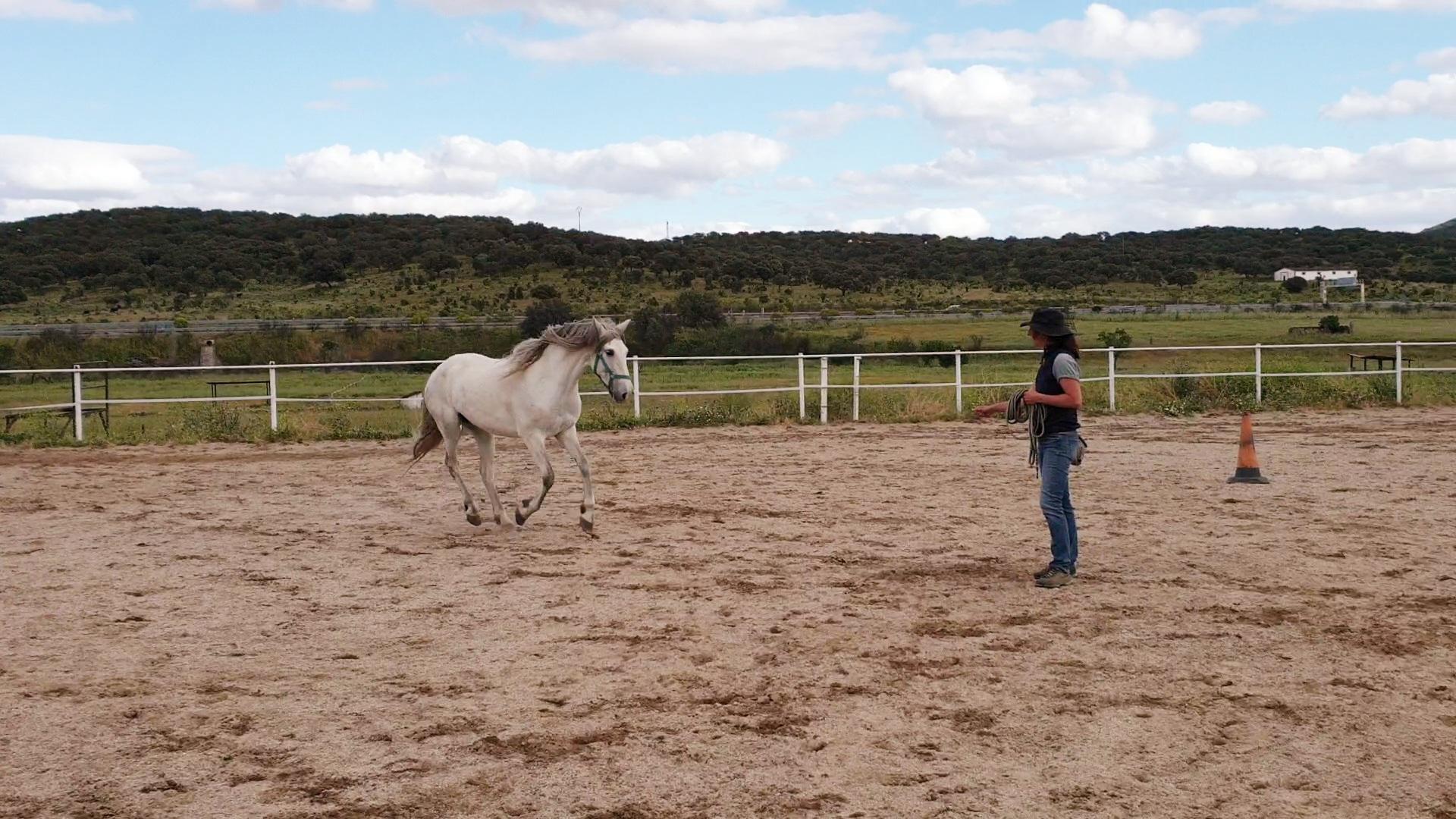 Etología equina: Desensibiliación y contracondicionamiento en caballos